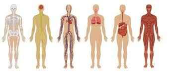 په انساني بدن باندې دسوديم اغېز
